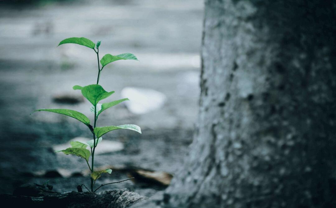 Wald und Klima mittels Digitalisierung schützen